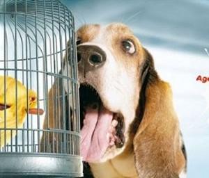 4 Fascinantes anuncios publicitarios protagonizados por animales
